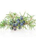 hydrolat genévrier bio alimentaire