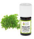 huile essentielle marjolaine à coquilles (bio)
