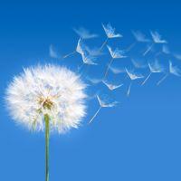 Allergies du printemps et huiles essentielles