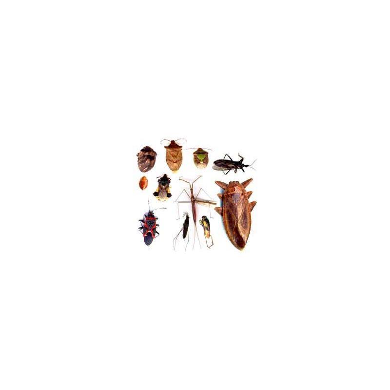 Huiles essentielles et insectes guide huiles essentielles - Piqure aoutat et huile essentielle ...