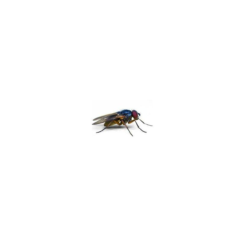 comment chasser les mouches guide huiles essentielles. Black Bedroom Furniture Sets. Home Design Ideas